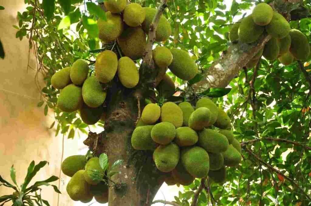 Nằm mơ thấy cây có nhiều quả đánh con gì?